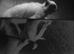 OJOBOCA: The Handeye (Bone Ghosts)